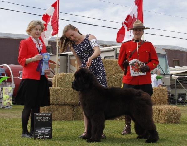 Burris - Winners Dog