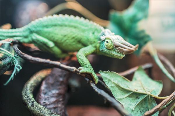 Reptiles, Exotics & Aquatics