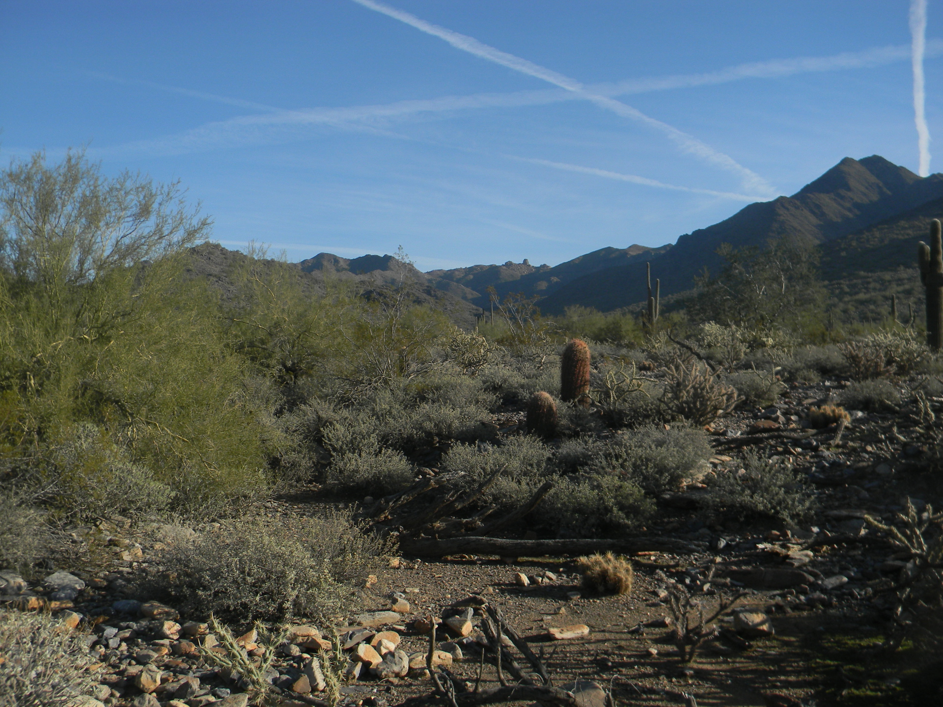 Sonoran Desert Bajada, Arizona Backpacking