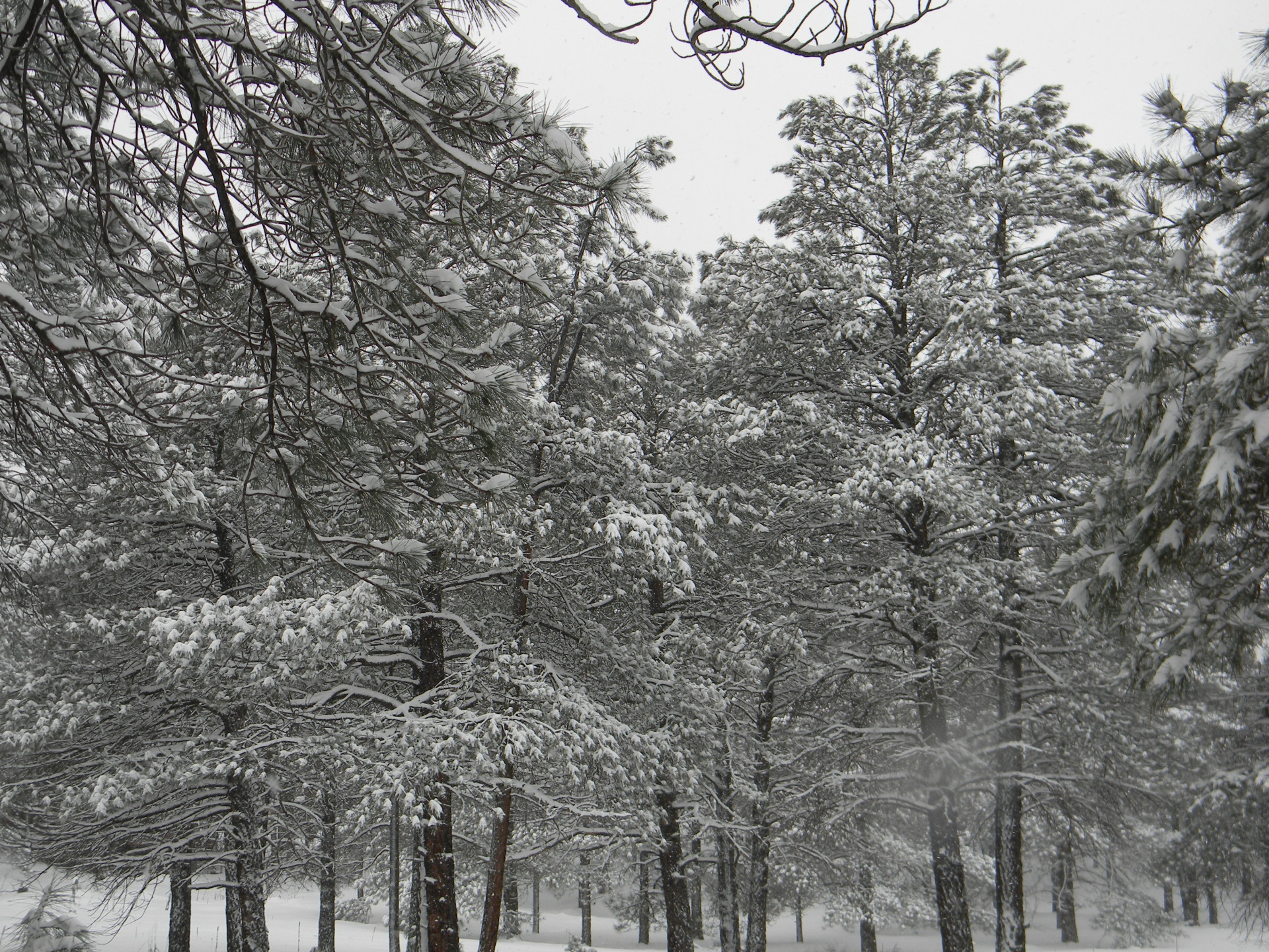 Let it Snow!  Top 5 Winter Activities in Flagstaff