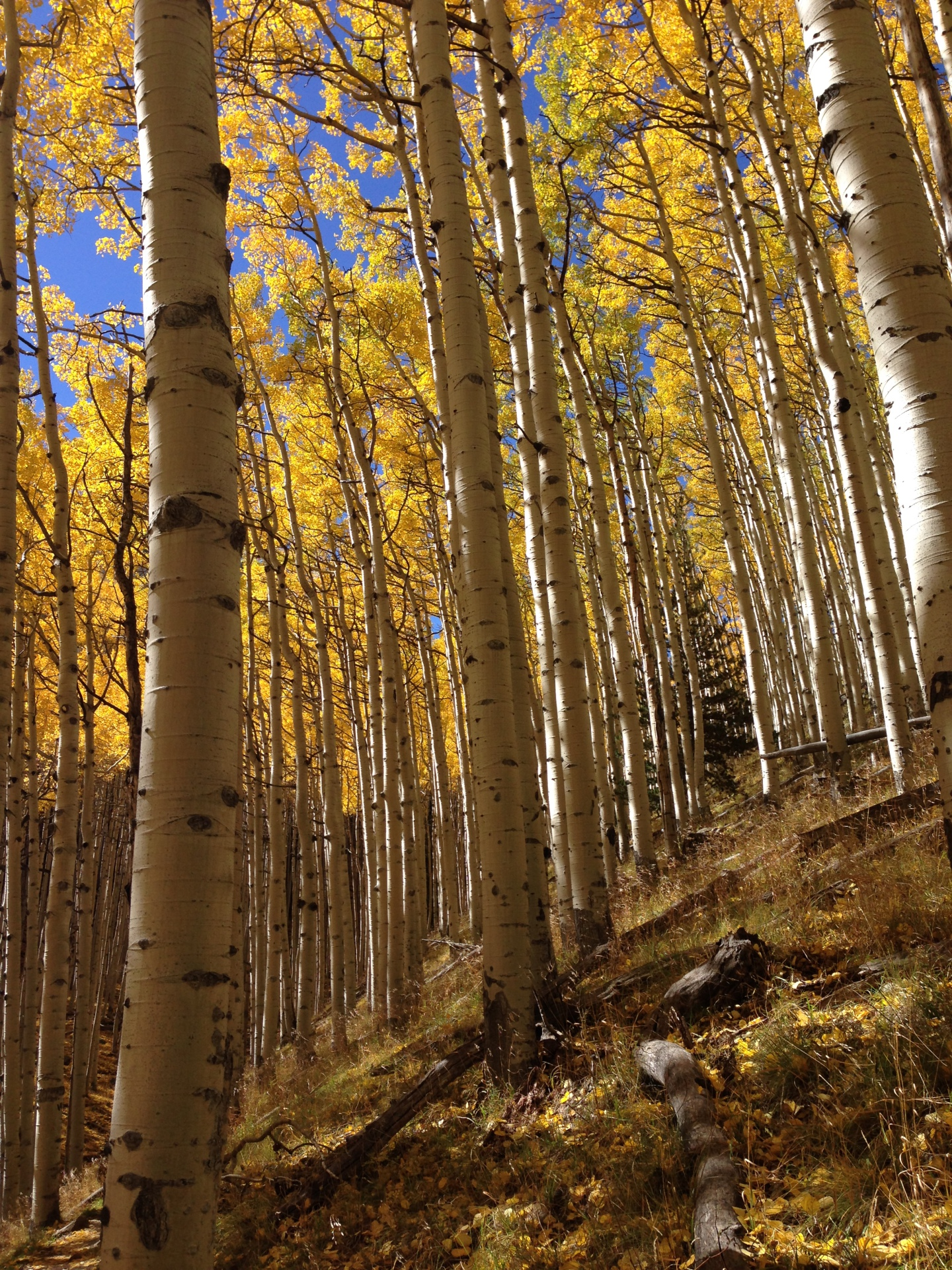 Top 5 Fall Color Hikes in Flagstaff