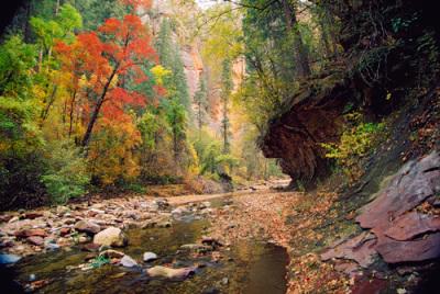 Fall in Oak Creek