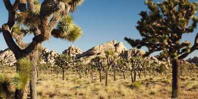 Teutonia Peak Trail, Mojave National Preserve