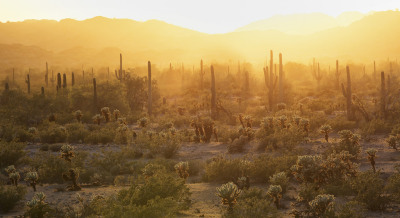 Sunrise in the Sonoran, Arizona, Backpacking