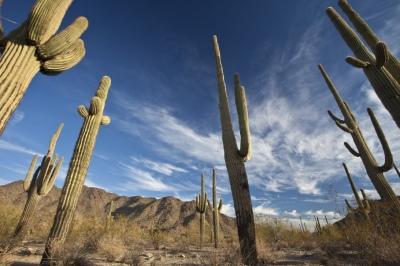 Sonoran Desert National Monument, Arizona Backpacking