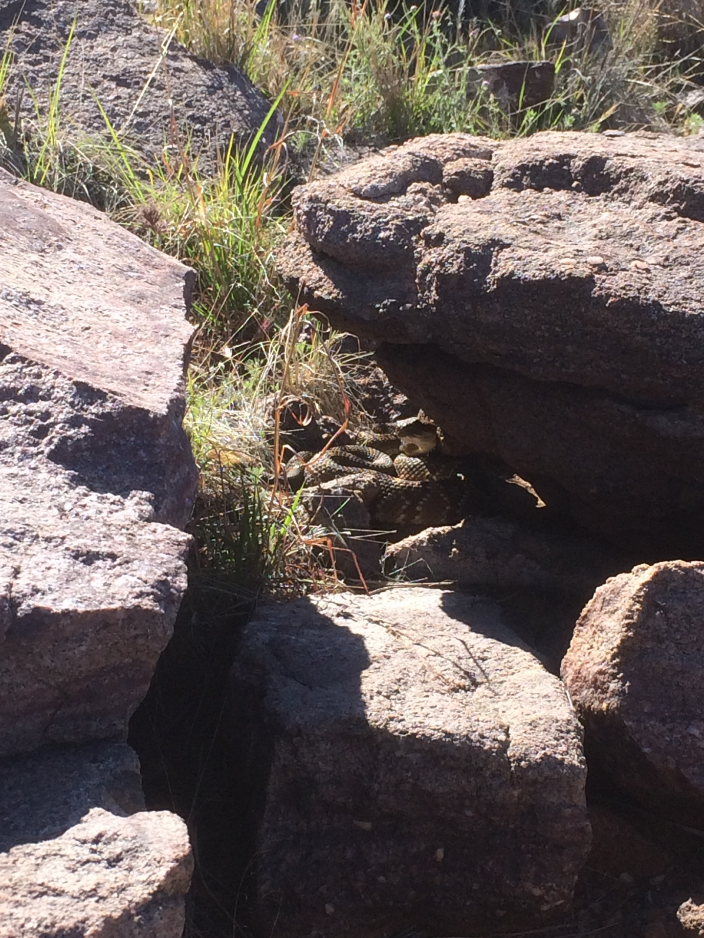 Western Diamondback Rattlesnake, Arizona Backpacking