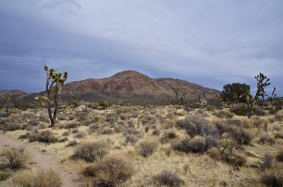 Teutonia Peak, Mojave National Preserve