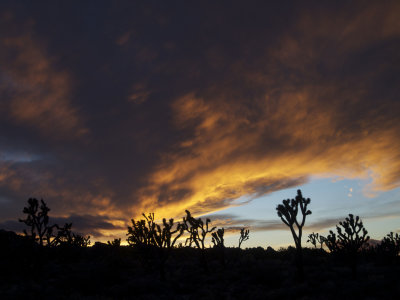 Sunset, Mojave National Preserve