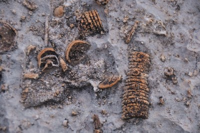 Fossils in Tuckup Canyon , Grand Canyon