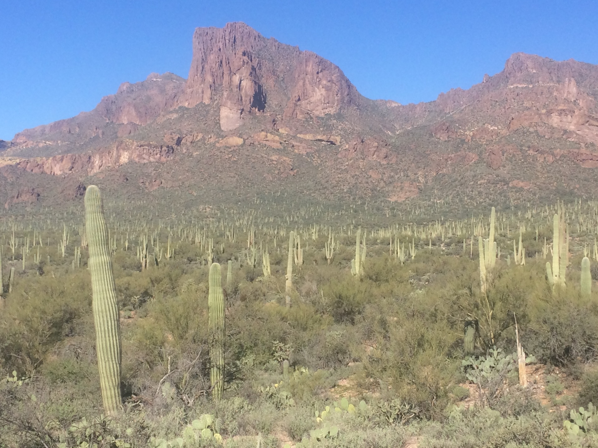 The Superstition Mountains:  Legends, History, and Lost Gold Mines