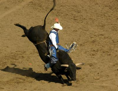 Riding the Bull-Should you control or adapt?
