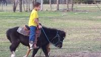 Diablo, 6 year old pony