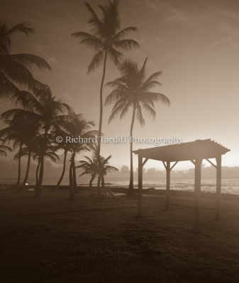 Foggy Sunrise - Sepia