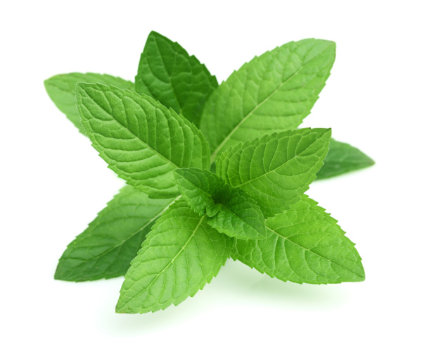 5 Great Health Benefits You Might Not Know of Mint