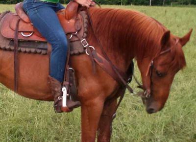 Reg. MFT Trail Horse