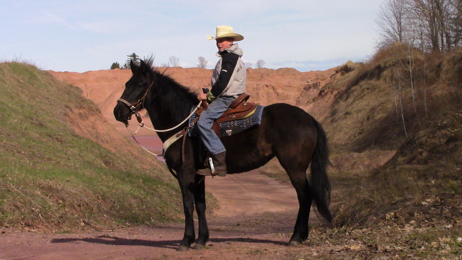 BLM Mustang Great Youth Saddle Horse !