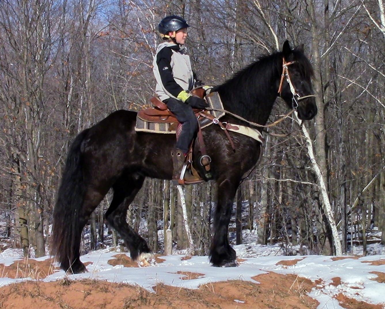 Impressive Dales Pony