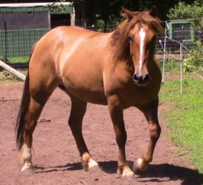 Summer- BLM Mustang