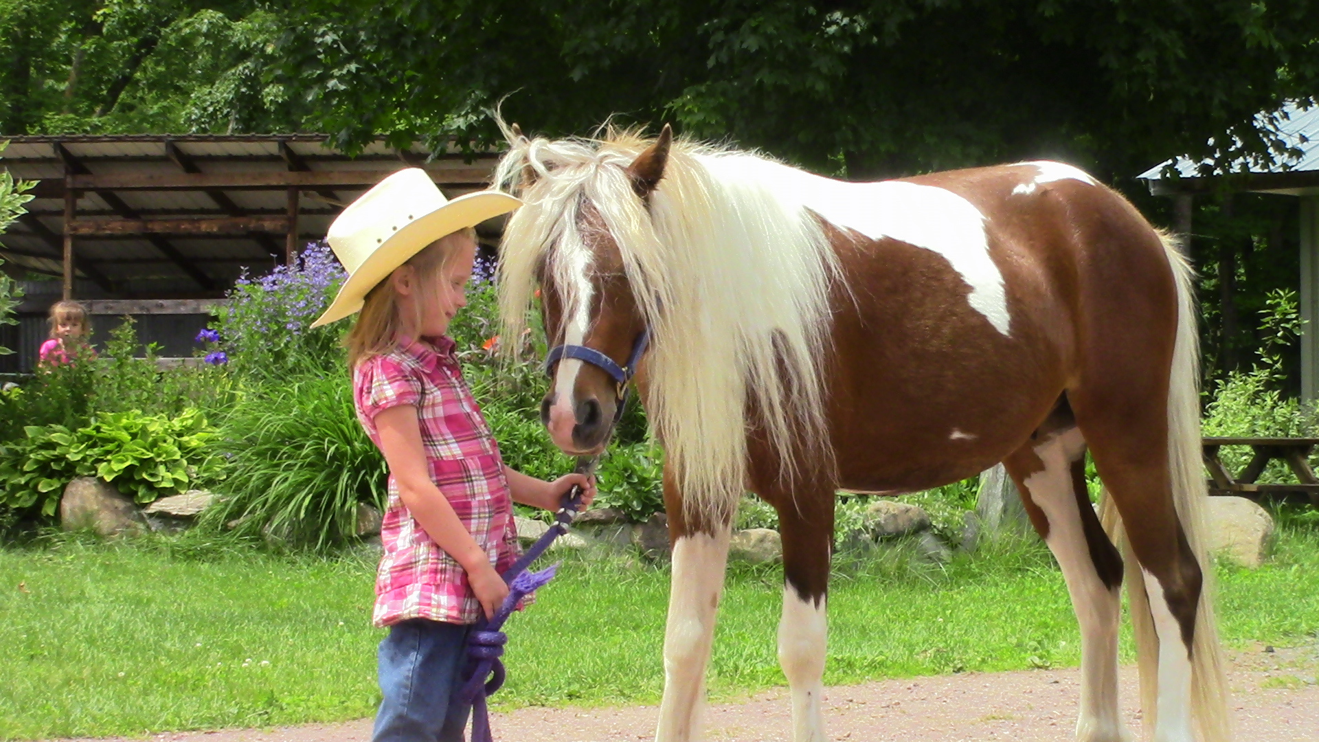 Pied Piper - Gypsy Cross Pony