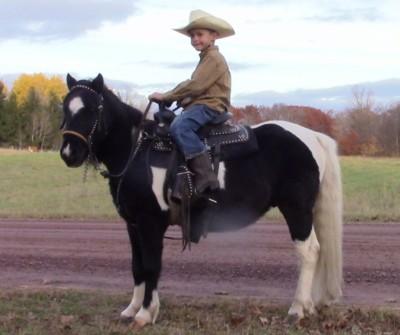 George- Shetland Pony