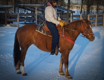 Well Trained BLM Mustang Mare