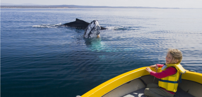 Sapphire Coast: Whales off Eden