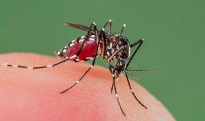 Fight off Mosquitos