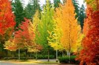 Planting Trees in the Fall
