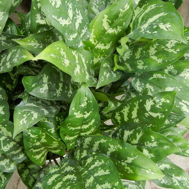 Super Plants That Clean Air!!!