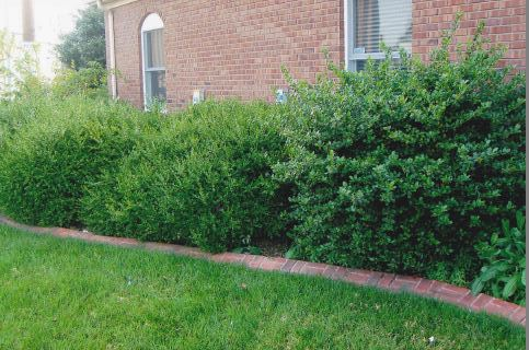 shrub trimming Newburgh and Evansville