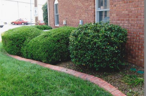 Shrub Trimming Evansville, Newburgh Indiana