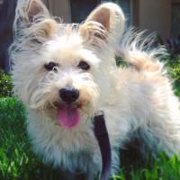 San Diego Dog Walker