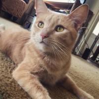 San Diego Cat Sitter