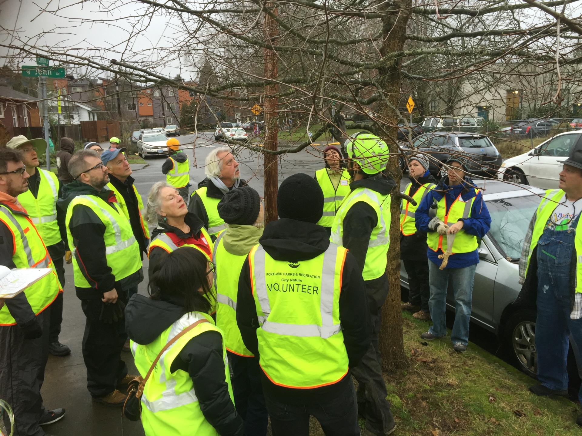 A Certified Arborist Discusses Pruning Strategy