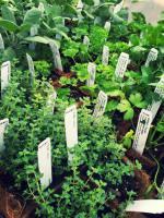 Herb starts