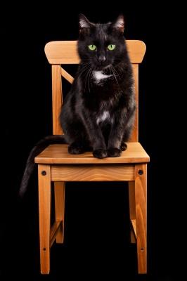Black cat sitting in chair