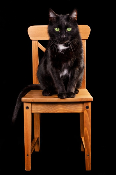 Black cat sitting in chair