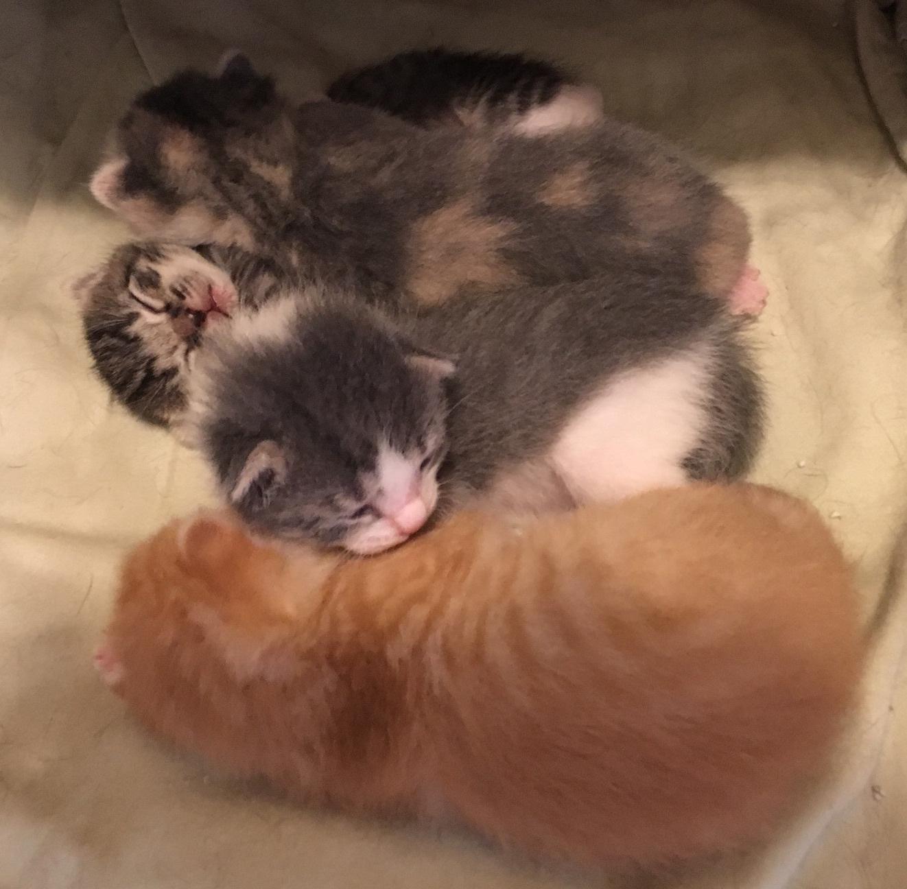 tiny kittens cuddling