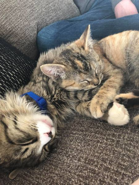 Two cats snuggling
