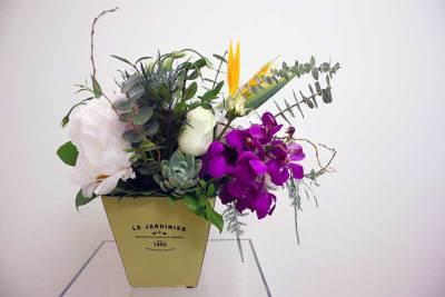 Succulent & Orchid Mix