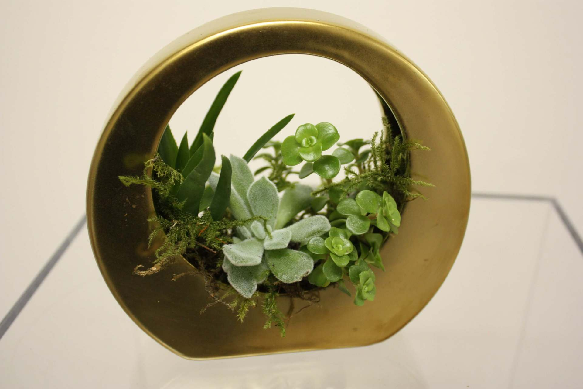 Succulent Gold Vase