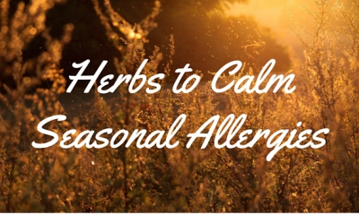 Herbs to Calm Seasonal Allergies