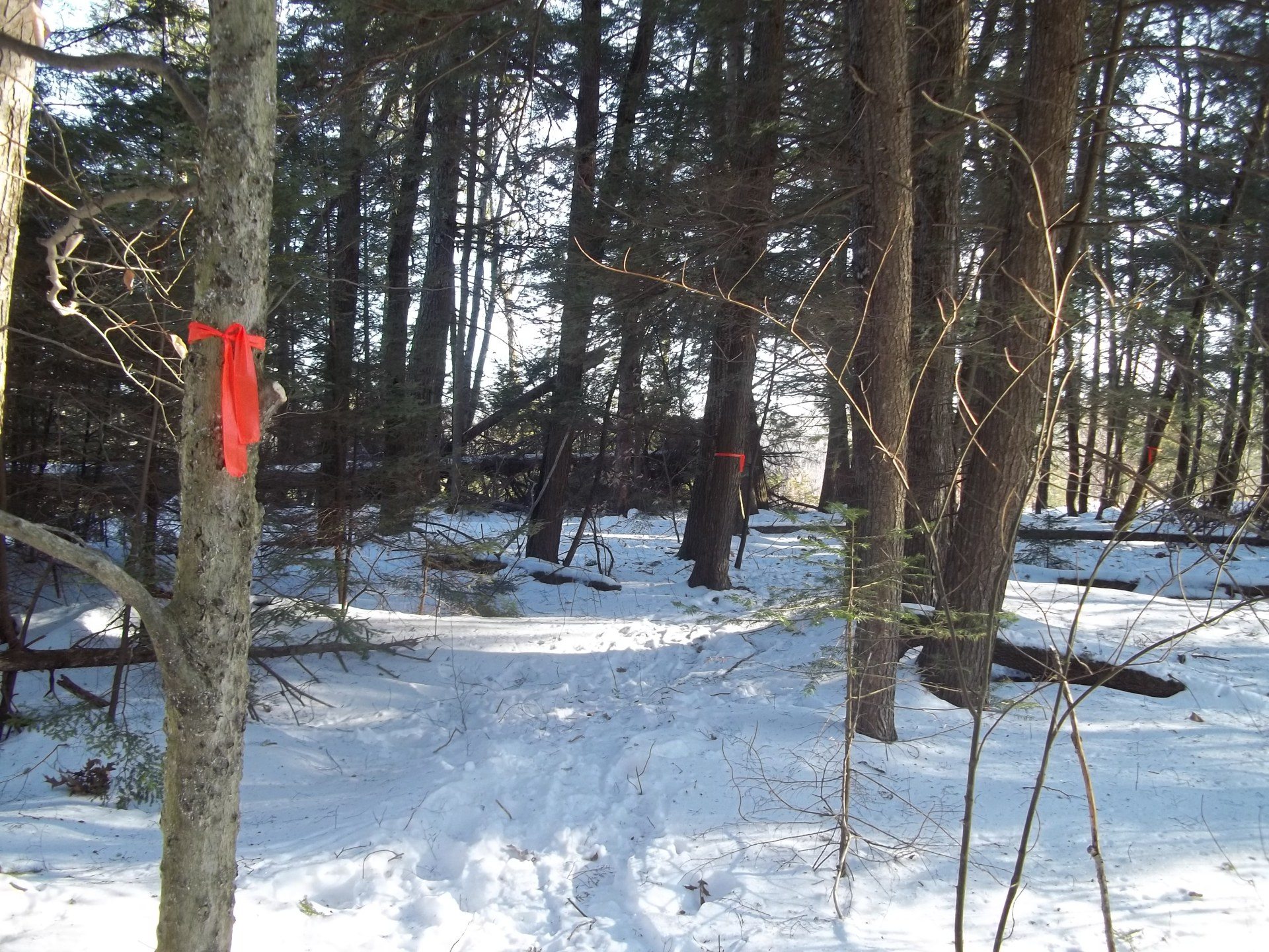 Building a trail around our hotel in Wiscasset Maine