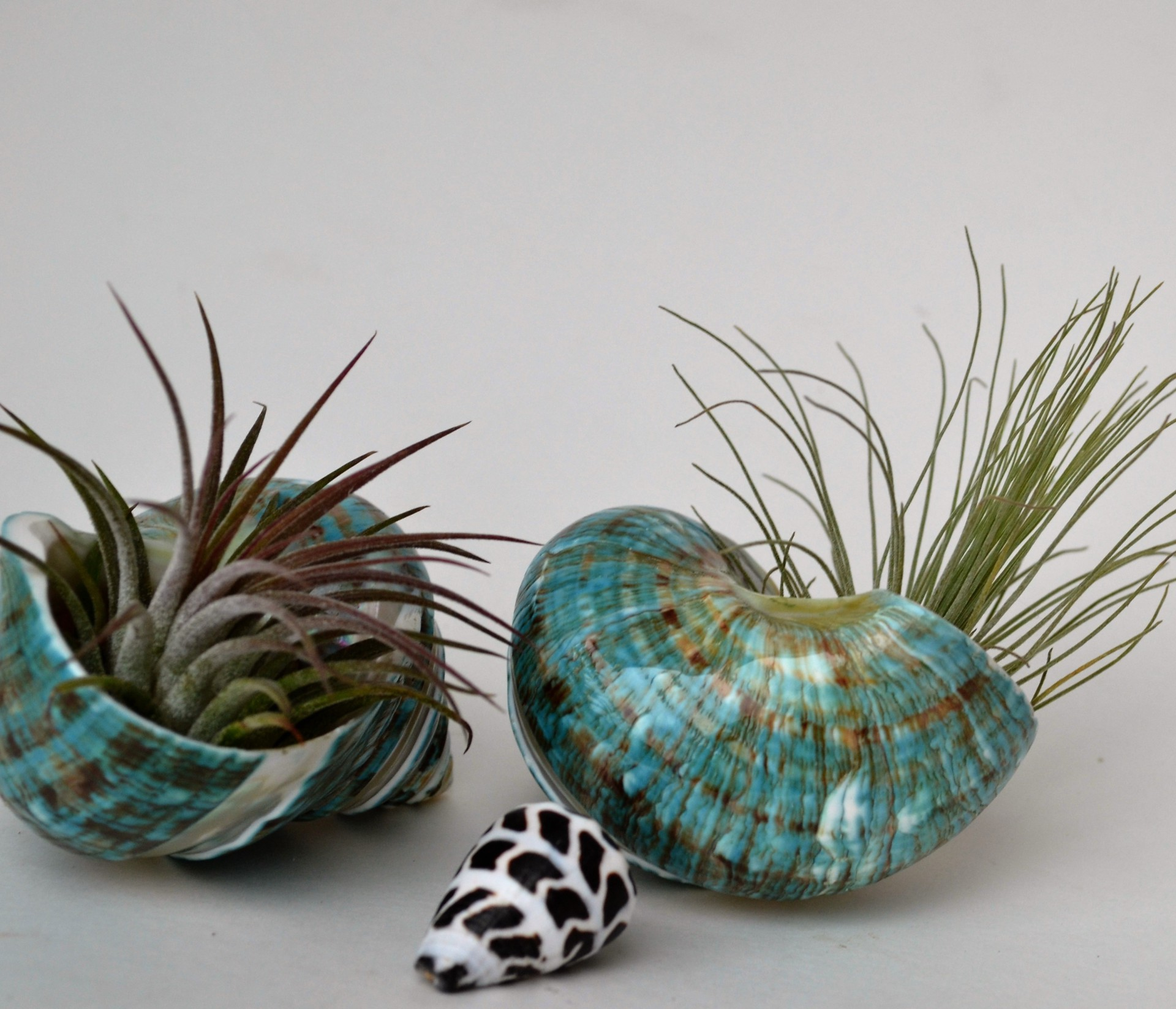 air plants, sea shells, bridge city girls,