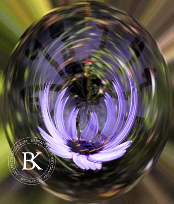 Cornflower in a sphere