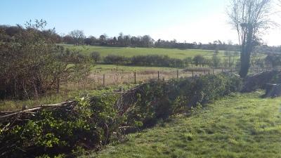 Hedge laying revealing beautiful view
