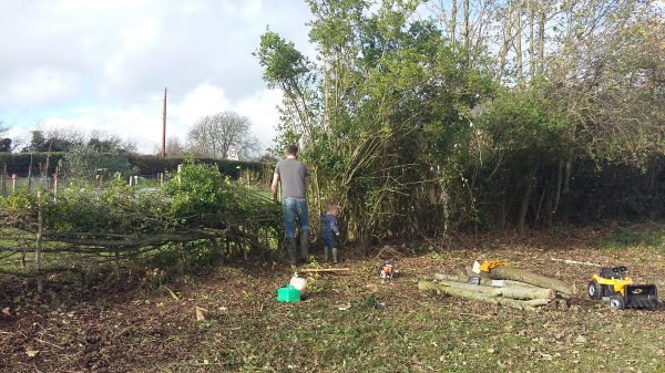 Hedge laying Family Business