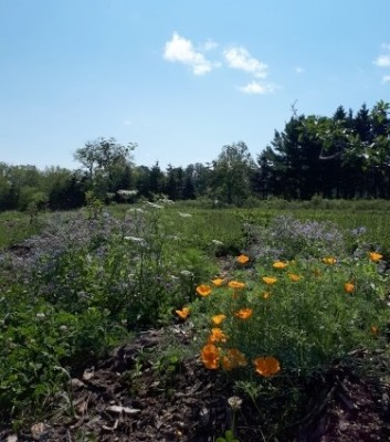 local permaculture farm