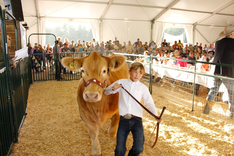 4H-Auction, County Fair, Flagstaff, AZ