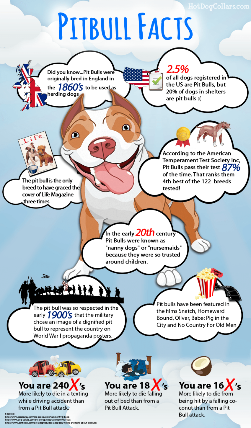 pitbull facts; pitbull myths; pitbull advocate